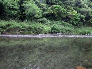 Katsura03