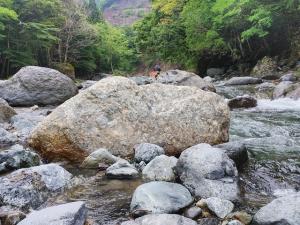 Hikaributi1